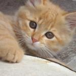 Tarthatok-e macskát a terhesség alatt?